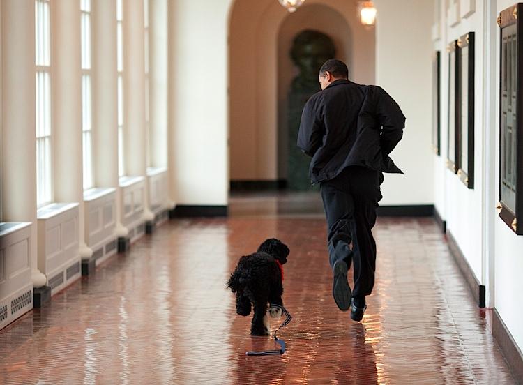 Obama Bo.jpg